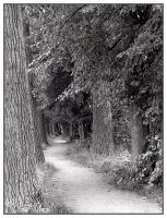 04_mainuferweg