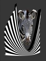 Trapp-Zebra